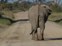 safari Afrika